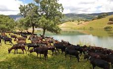 UPA-UCE denuncia que la ganadería ha perdido 131 millones por la sequía