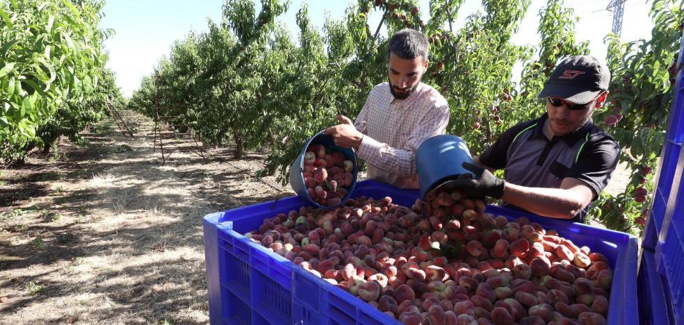 El 75% de la fruta extremeña tiene como destino la exportación