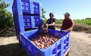 El sector agrario propició 31.000 contratos en mayo, casi la mitad de los firmados