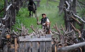 Agarrar al ciervo por los cuernos