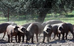 Agricultura abona más de 2 millones de euros en ayudas agroambientales
