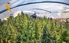 Dos detenidos en Badajoz por cultivar 238 plantas de marihuana en una parcela de Tres Arroyos