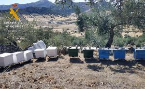 Dos detenidos en Peñalsordo por el robo de 70 colmenas en La Siberia