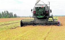 UPA-ECE pide al Ministerio de Agricultura un etiquetado de origen para el arroz