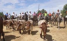 Una gran vaca de Victorino Martín abre los Sanjuanes