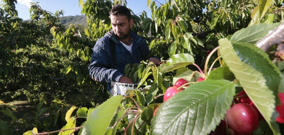 El sector agrario extremeño tiene un 23% más de trabajadores extranjeros que hace un año