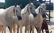 La Yeguada Rosa de Villanueva es elegida mejor ganadería de Europa