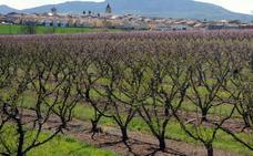 Los fruticultores están arrancando árboles por la subida del salario mínimo