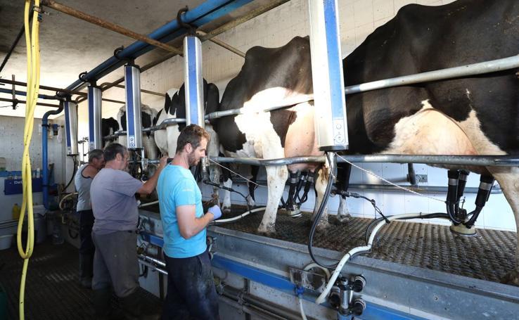 El vacuno de leche resiste y siguen activas un centenar de explotaciones en la región