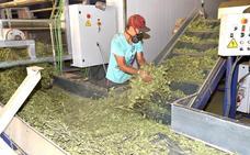 Extremadura participa en proyecto para autoempleo de jóvenes en zonas rurales
