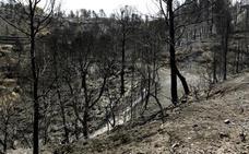 Los bomberos frenan el avance de los fuegos de Madrid y Ávila