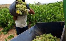 La producción de uva en la región será menor debido a la sequía