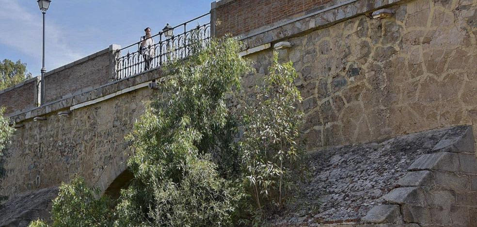 Rebrotan los eucaliptos entre las piedras del puente de Palmas