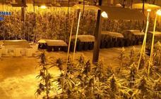 Ingresa en prisión un hombre detenido por la Policía Nacional por cultivo de marihuana en Don Benito