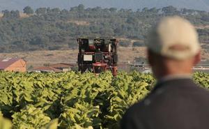 El Gobierno y la Junta prometen apoyar a los tabaqueros ante la reforma de la PAC