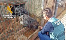Desmantelado un zoológico ilegal en Villafranca de los Barros