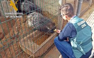 La Guardia Civil descubre y clausura un zoo ilegal en Villafranca de los Barros