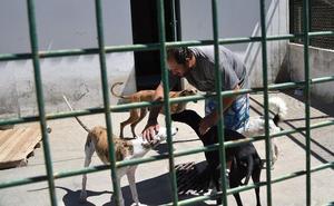 La protectora de Plasencia denunciará a los criadores ilegales de perros para frenar los abandonos