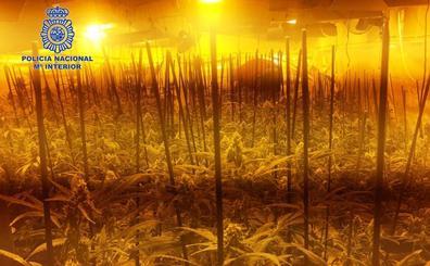 Detenidas dos mujeres que tenían 600 plantas de marihuana en Don Álvaro