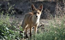 FEDEXCAZA impartirá un curso de control de predadores en FECIEX 2019