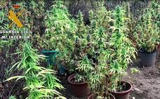 La Guardia Civil detiene a un hombre en Vegaviana por una plantación de marihuana