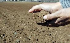 UPA-UCE pide medidas urgentes por la sequía que asola Extremadura
