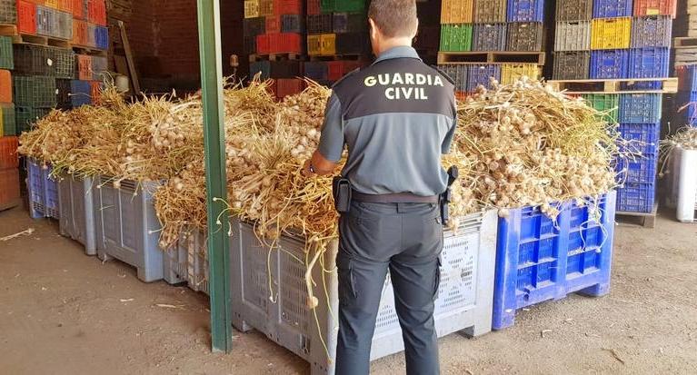 Detenidas tres personas en Aceuchal por robar 7.000 kilos de 'ajos morados' de Cuenca