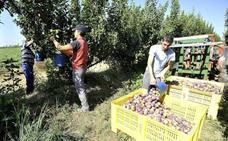 UPA-UCE traslada a la Junta la «grave situación» de los fruticultores extremeños