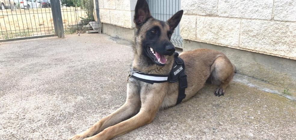 Luky, la persistente perra antidrogas en Cáceres