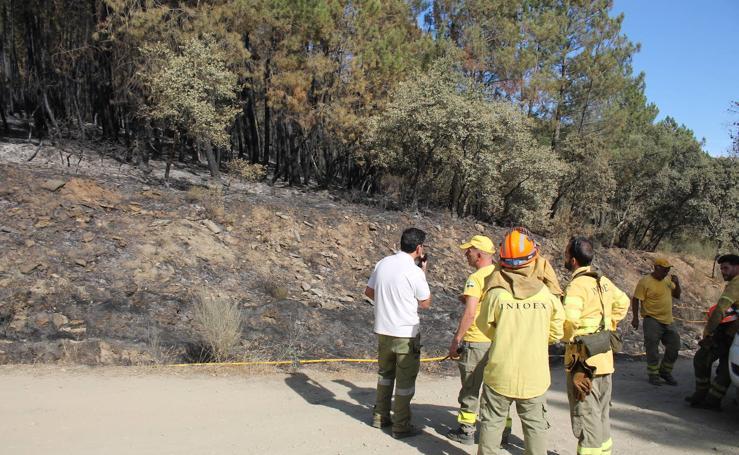 Imágenes del incendio que ha afectado a un pinar de Monesterio