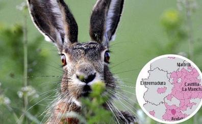 Fedexcaza reclama medidas ante el rebrote de la mixomatosis de la liebre en Extremadura