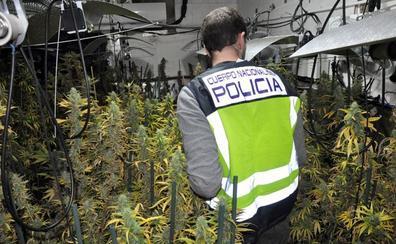La Policía Nacional desmantela una plantación de marihuana en una vivienda de Badajoz