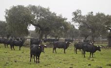 Extremadura destina 83.000 euros a apoyar y fomentar la cultura taurina