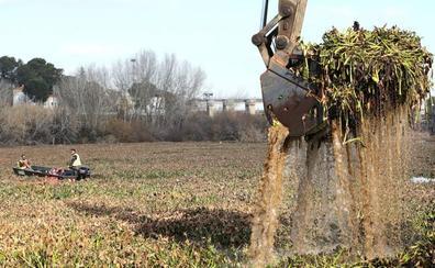 La Junta y la CHT no han detectado camalote en la cuenca extremeña del Tajo