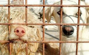 El Refugio espera que la perrera provincial reduzca la llegada de mascotas
