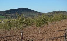 El cultivo de la almendra, en auge en Extremadura