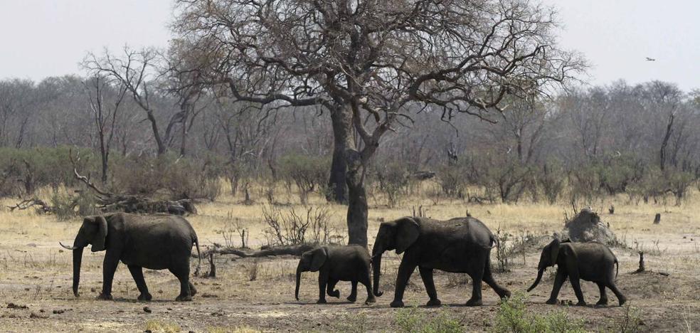 Un puñado de medidas para evitar una extinción masiva de especies