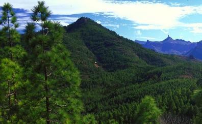 Así es el Parque Natural de Tamadaba, el corazón de la biodiversidad canaria