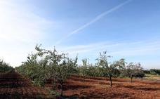 La producción de almendra se dispara hasta superar los 150.000 kilos este año
