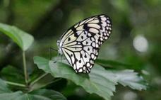 Las alas de mariposa albergan un revolucionario método antifalsificación