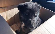 Nuevo llamamiento para acabar con el abandono de animales en Navalmoral