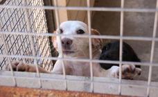 SOS Perrera alerta de la caída de las adopciones en los últimos años