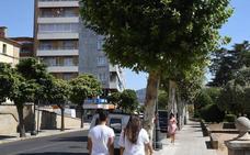 El Ayuntamiento retirará de forma gradual diez mil plataneros