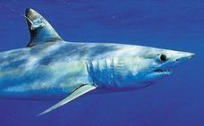 18 especies de tiburones y rayas entran en el listado de especies protegidas
