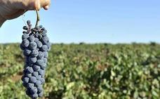 Apag convoca una manifestación por los bajos precios de la uva el 5 septiembre