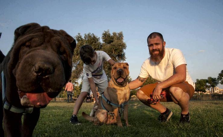 El parque donde solo juegan los perros