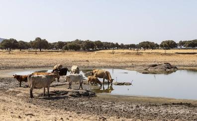 «Si no llueve de aquí a final de mes, nos quedamos sin agua para el ganado»