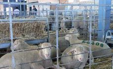 El XXXIV Salón del Ovino de La Serena se celebrará en Castuera del día 6 al 8 de septiembre