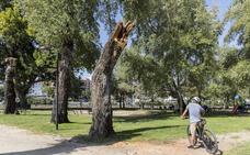 La Isla registra nuevas caídas de ramas durante el fin de semana