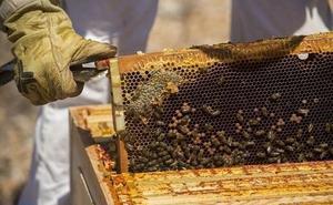 El sector apícola prevé la mitad de producción que en 2018 durante la campaña de trashumancia